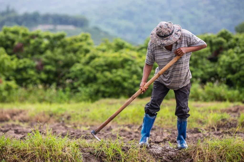 Farmer's Resume and Skills